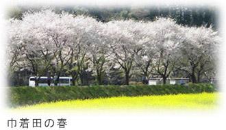 巾着田の春